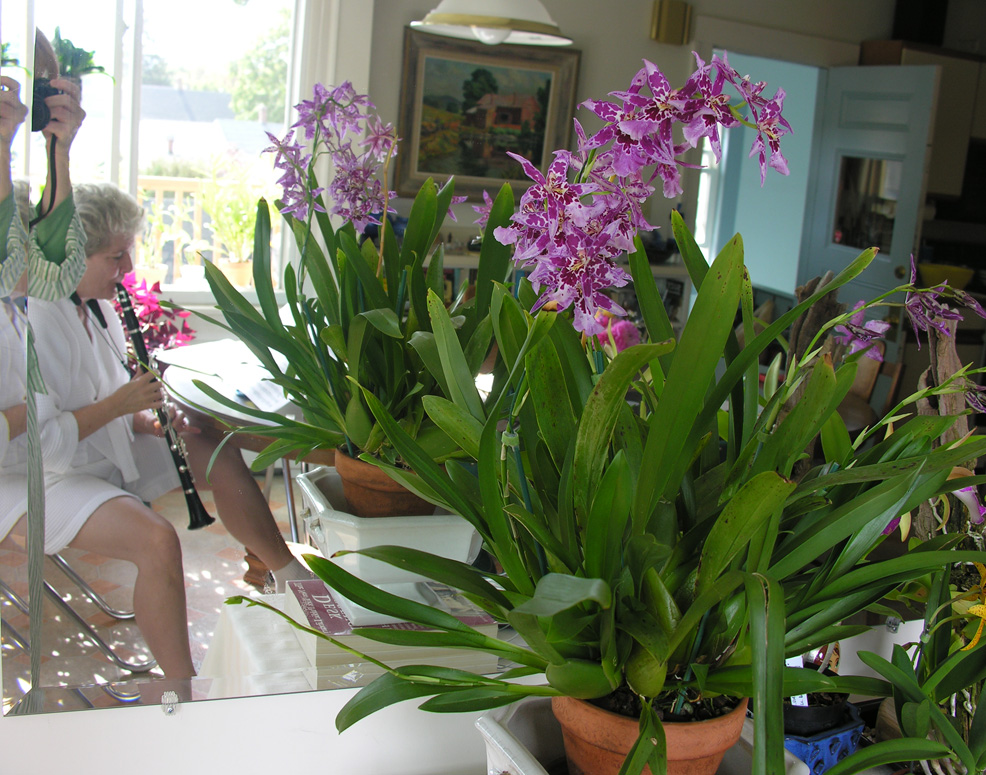 Heather clarinet & Tom's orchids